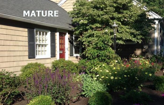 Mature_cottage