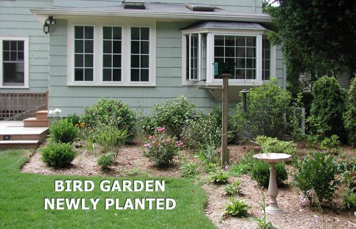Bird_1_newly_planted