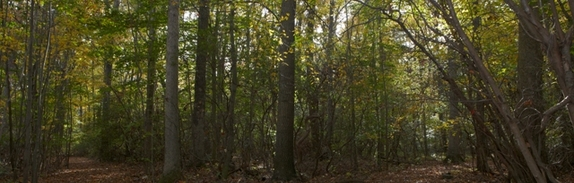 Woods_path_fork-fall_2012__32