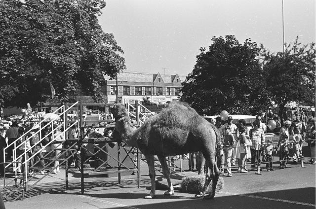 1985_04d_camelride