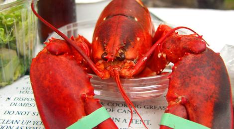 Bigstockphoto_lobster_143887