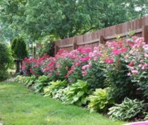 390e6ea9c2d168e9d9a47b967c0fee4a--flowers-garden-flower-gardening